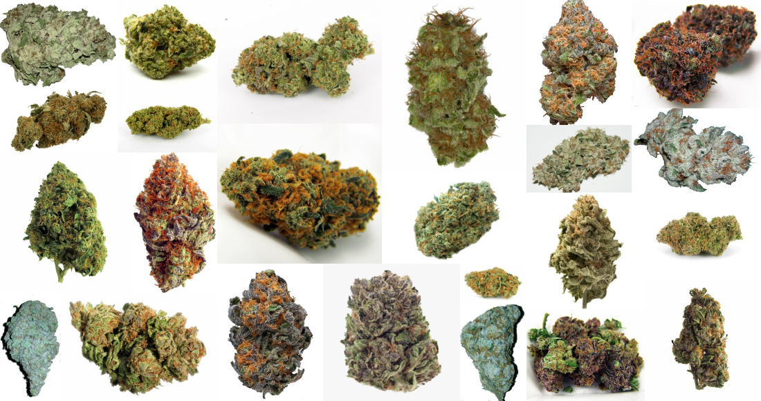 THC Cannabis Strains Marijuana Buds - Sativa & Indica
