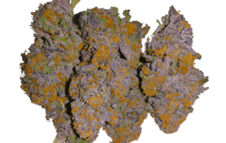 Indica Strain - Granddaddy Purple - GDP - THC - CBD